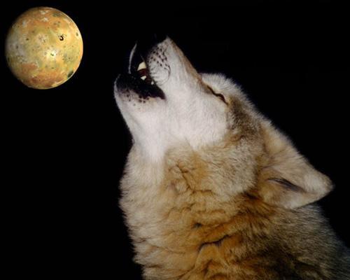Очередное фото волк воет на луну - от бабубы ...